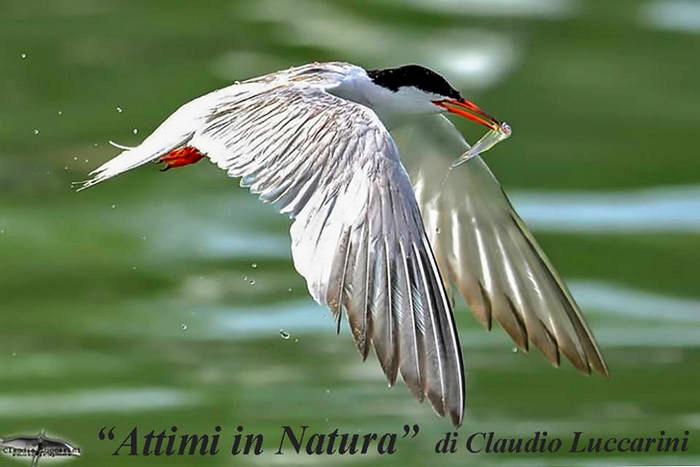 mostra fotografica: Attimi in natura